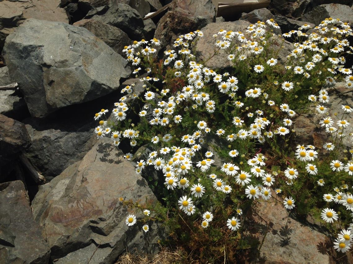 flowers in rocks