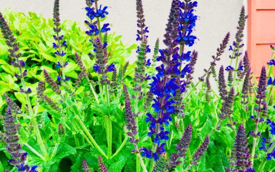 purple spring flowers writing